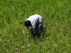 Farmers plan mega protest: Making right noises not enough, agriculture needs renewed focus by govt