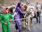 Travelling with the Van Gujjars: Tracing a forest-dwelling nomadic tribe's spring migration
