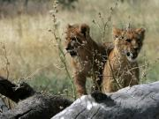 Cheetahs, elephants and warthogs: Tales from a safari