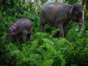 India Day @ Oxford: Epistemology, elephants and perspectives