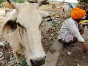 Aadhaar cards for cows? Three reasons why this vegetarian is against the beef ban