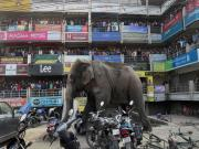 Big trouble in Siliguri: Wild elephant goes on a rampage in West Bengal town