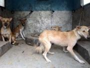 The violent street dog in Kerala is symbolic of the physical decay of the state