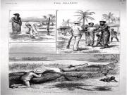 Did crocodile hunters use babies as bait in India?