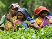 How tea sector in Assam braved PM Modi's demonetisation storm to keep paying wages