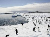 Penguin numbers on the rise as glaciers retreat: Report