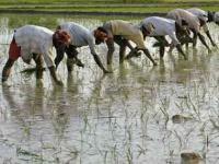 Govt assures relief for farmers hit by rain, hailstorms