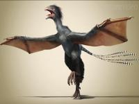 Move over Batman, dinosaur with bat-like wings found in China