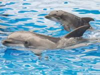 It can fire deadly arrows: Hamas allegedly captures Israel super spy, and it's a dolphin