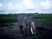 British tourist trampled to death by elephant in <b>Thailand</b>