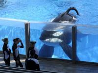SeaWorld to partner with Humane Society, end whale breeding programme immediately