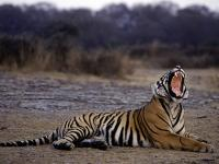 Asia tiger conservation conference: India to help Cambodia in restoring fauna to their forests