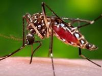 Canada confirms its first sexually transmitted Zika case