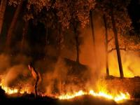 Forest fires: NGT issues show cause notices to Uttarakhand, Himachal Pradesh