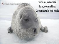 Watch: Sunnier weather accelerating Greenland's ice melt