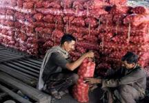 Farmer dumps 13 quintals of onions in field as protest after getting 5 paise per kg