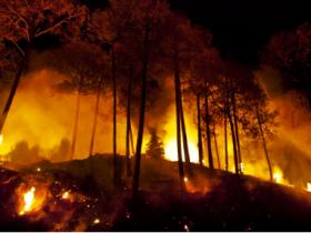 Uttarakhand forest fires: 3 NDRF teams deployed, Centre assures help