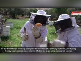 Watch: Honey provides sweet relief for Palestinian women
