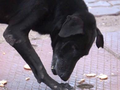 Watch: Navi Mumbai observes Poison Biscuit Day in memory of murdered stray dogs