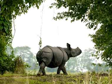 Protecting the rhino in Kaziranga. Reuters