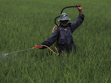 A farmer sprays pesticide in a paddy field near Subang, Indonesia's West Java province