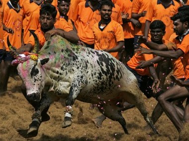 Youth attempt to catch a bull during Jallikattu at Palamedu Village near Madurai in this file photo. AFP