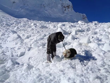 All for one, one for all. A army canine on duty in Siachen Glacier. Image courtesy Indian Army