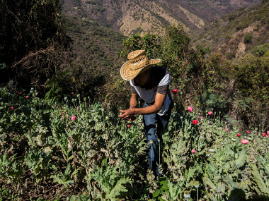A Mexican farmer working in an opium filed in Guerrero. Getty Images