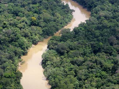 Representational image of the Ecuadorian Amazon rainforest. AP