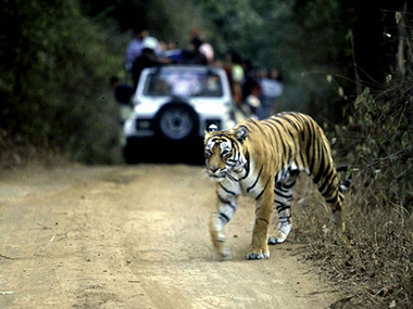 A file photo of a tiger at Ranthambore. AFP