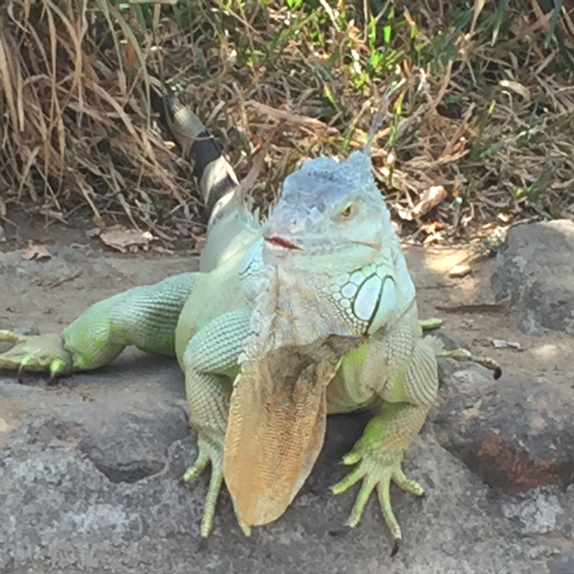Water sprinklers in the Iguana enclosure help the reptile cool off. Firstpost/Janaki Murali