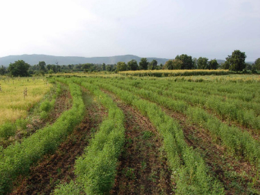 Futane's farm where contour bunding was implemented. Image courtesy: Vasant Futane