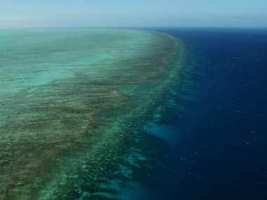 Coral bleaching has affected virtually the entire Great Barrier Reef and many other coral reef systems globally. Getty images.