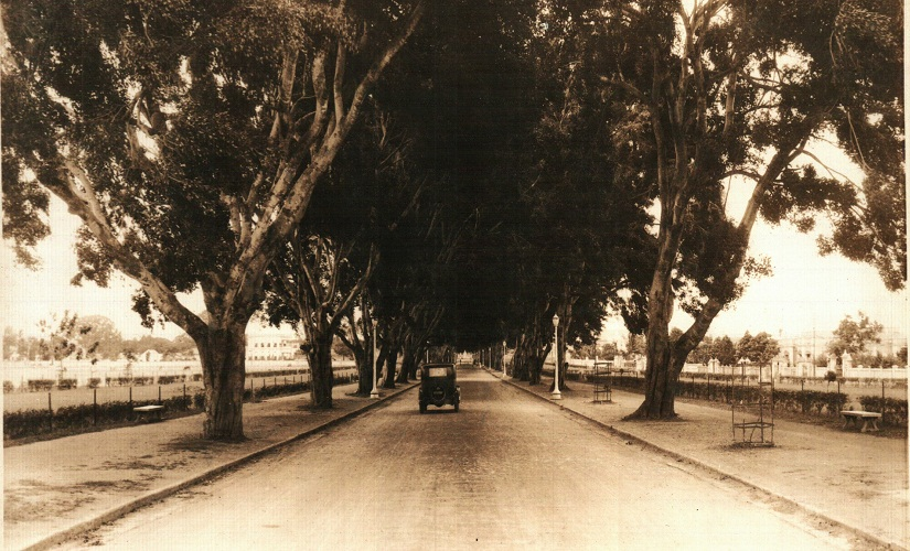 KR Road in the 1930s, with banyan trees. Photo from the archive of Chandra Ravikumar