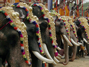 File image of elephants in Kerala. Reuters