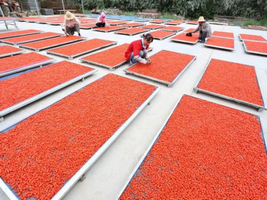 Workers dry wolfberries at a yard in Linze, Ganse province, China. Reuters