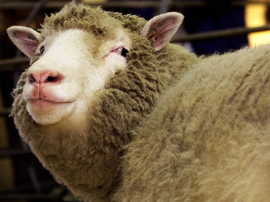 File photo of Dolly the sheep. Reuters