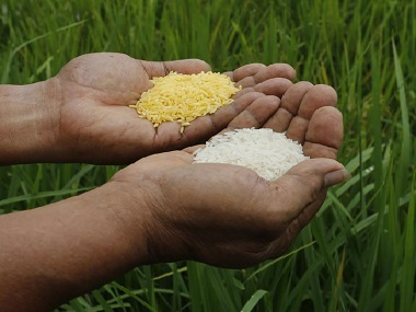 Representational Image of Golden Rice. Reuters.