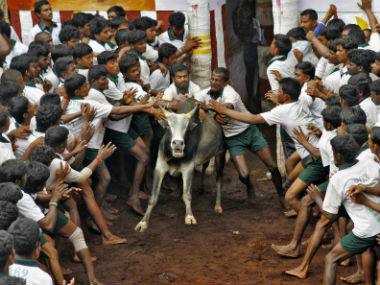 Villagers try to tame a bull during the Jallikattu festival. Reuters