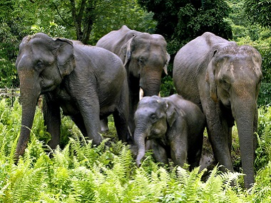 A group of elephants stroll in Kaziranga National Park. Image for representation only. Reuters/File photo