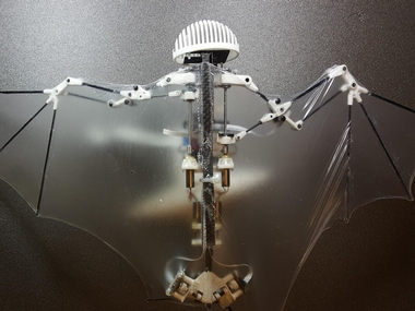 CalTech and University of Illinois Urbana-Champaign researchers have created a robot that mimics bat flight. AP