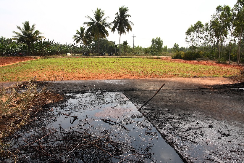 The exploratory well that was left open, where oil still bubbles up at the surface; and sesame growing in the adjacent field