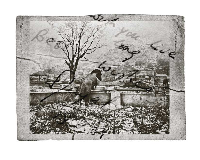Sumit Dayal / Horse and Cemetery / Srinagar, 2011