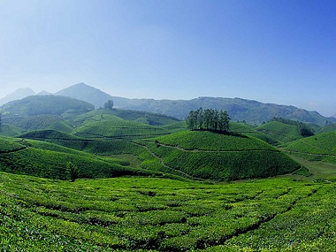 File image of Munnar. Image credit: Kerala Tourism website