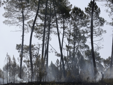 A man walks along a recently burnt patch of pine forest in Serra do Macario, central Portugal. AP