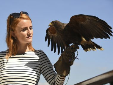 Rufus the Harris hawk is held by handler Imogen Davies as she is interviewed by the media at The All England Lawn Tennis Club in Wimbledon, southwest London, on July 5, 2017 on the third day of the 2017 Wimbledon Championships. Rufus the Hawk is used at the All England Club to keep pigeons away from the venue.  / AFP PHOTO / Justin TALLIS / RESTRICTED TO EDITORIAL USE
