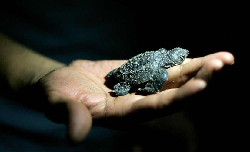The turtle is the world's oldest inhabitant and a vast repository of evolutionary experience and wisdom. Reuters