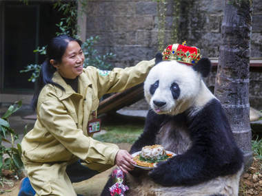 "File image of ""Basi"", world's oldest panda on her last birthday. AP"