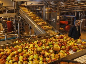 Employee stands next to processing belt carrying apples inside an apple juice manufacturing unit on the outskirts of Srinagar
