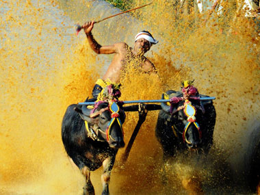 The Pilikula Kambala which is organised by the government has also stopped due to the legal entangle. Image courtesy M Raghuram